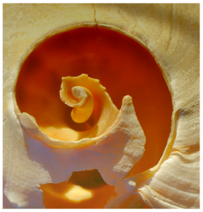 orange/water/spiral